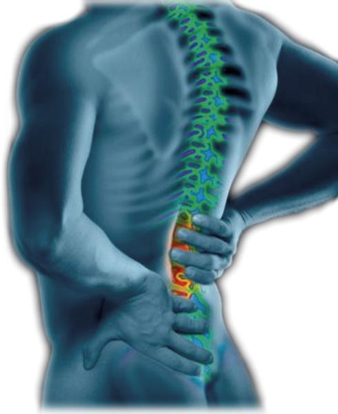 Органы со спины человека анатомия