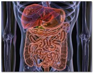 Как лечить раздраженный кишечник