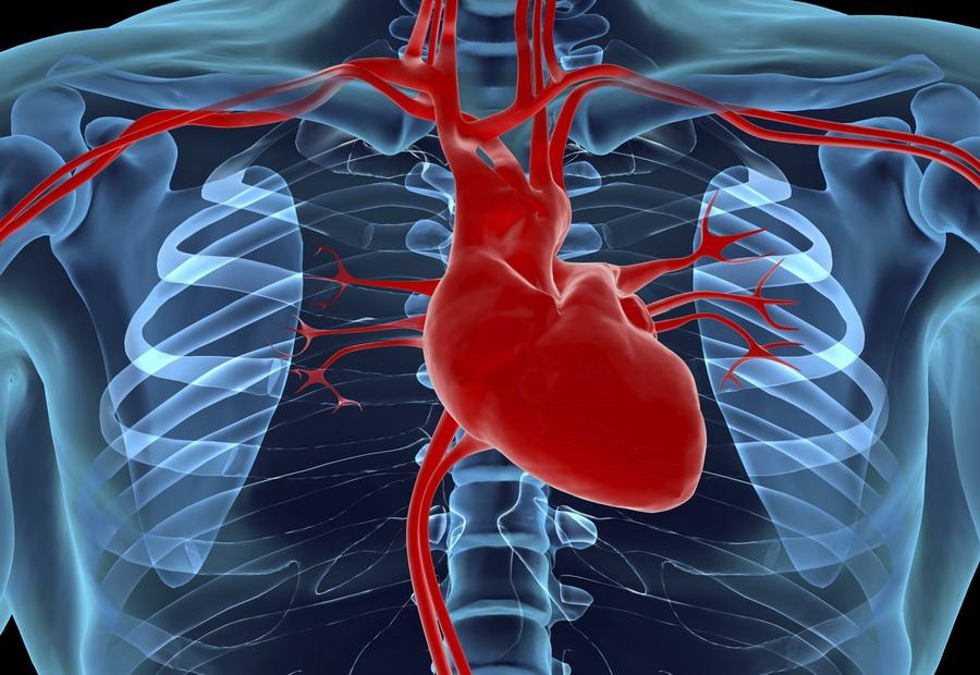 Митральный клапан - строение сердца
