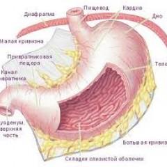 Осложнение язвы желудка человека