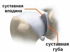 Изображение - Особенности строения коленного сустава sm_116205001426070112