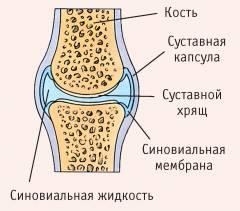 Изображение - Особенности строения коленного сустава sm_229020001426069981