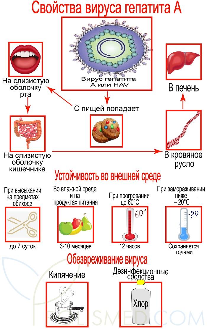 polismed.com, гепатит, а., причины,, симптомы,, признаки,, диагностика, и, лечение, патологии