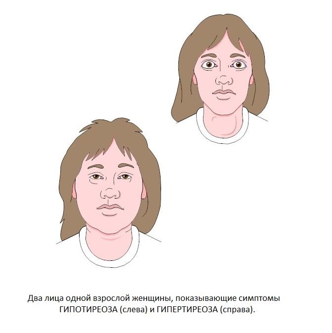 Что такое тиреотропный гормон и за что отвечает