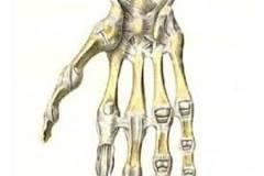 Болят суставы пальцев рук.