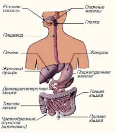 Cимптомы и лечение лямблий в печени